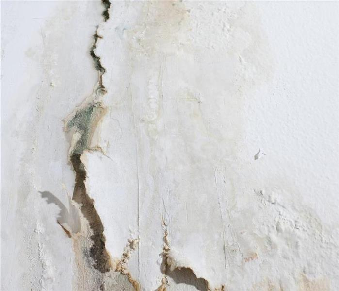Mold Remediation Why You Need Mold Damage Remediation Before Selling Your Hauula Home