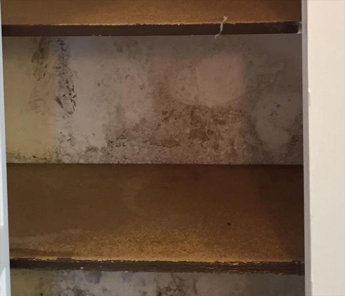 Mold Remediation Mold in Your Hawaii Home